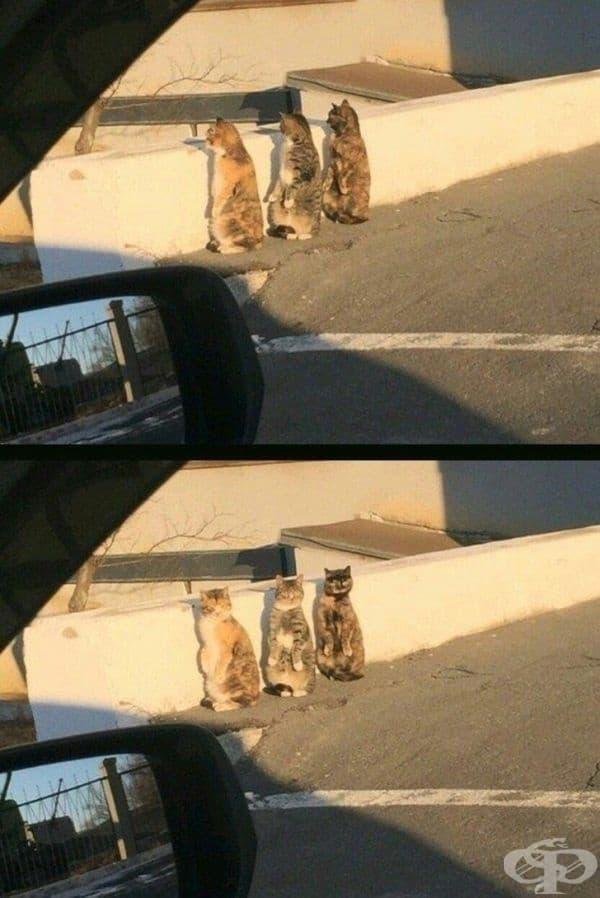 """Тези котки..."""
