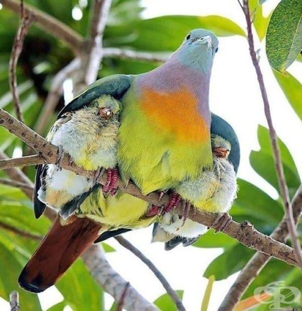 Птица и нейните малки