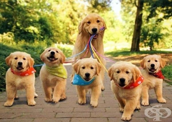 Най-добрият начин за разхождане на кученца