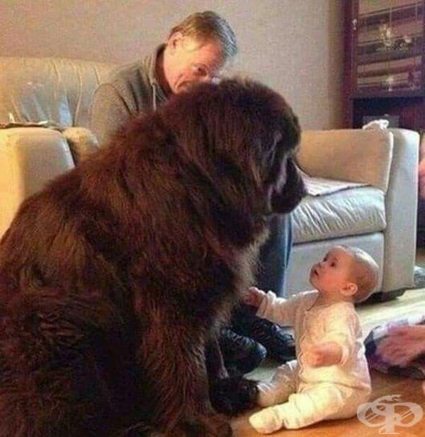 """""""Ето това се казва куче."""""""