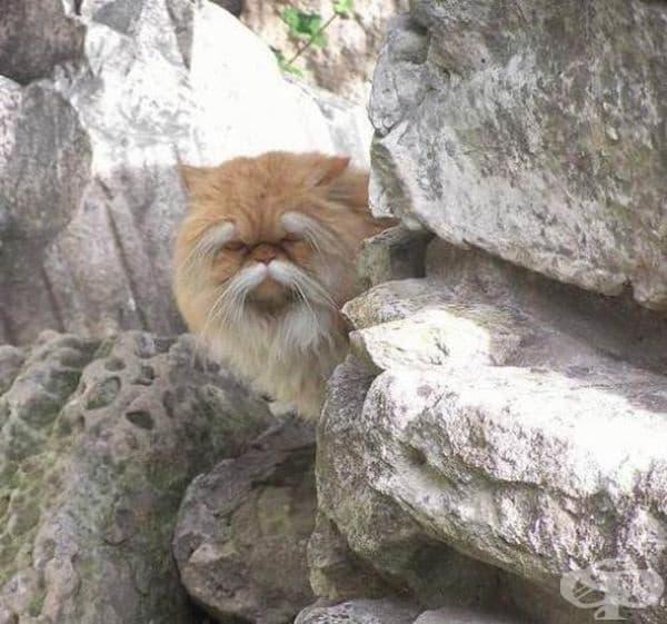 """""""Тази котка изглежда като стар и сърдит майстор по кунг-фу."""""""