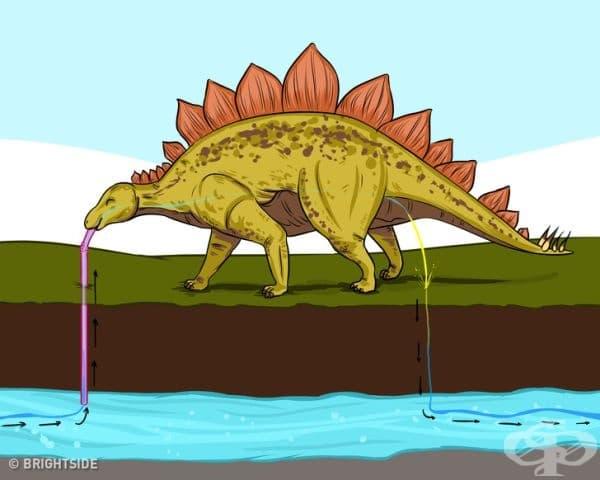 Шансът да консумирате чаша с вода, която съдържа поне една водна молекула, преминала някога през тялото на динозавър, е около 100%.