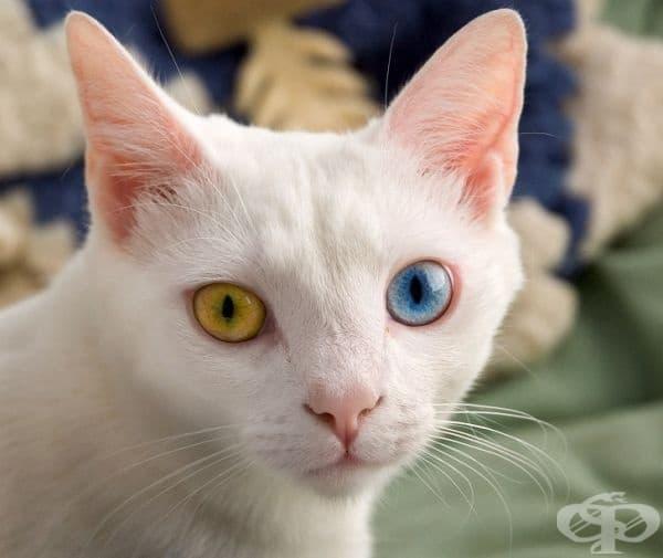 Някои котки са алергични към хора.