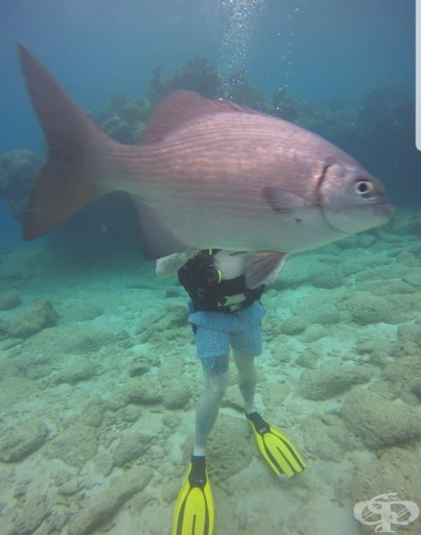 Подводните снимки, не са това, което бяха.