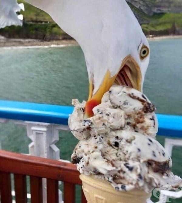 Когато просто искате да ядете сладолед, но вместо това се сдобивате със страхотна снимка на чайка.