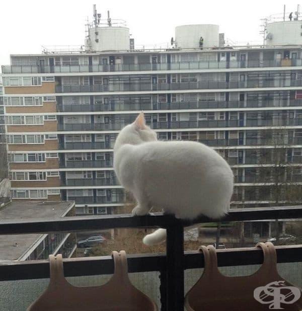 """""""Винаги настръхвам, когато видя котката си на това място."""""""