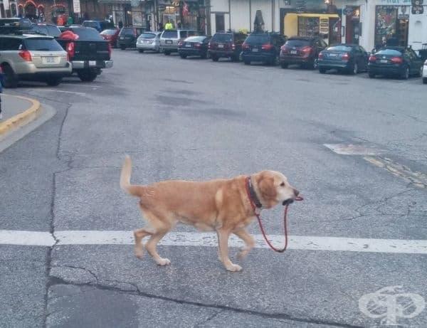 Просто куче, което се разхожда само.