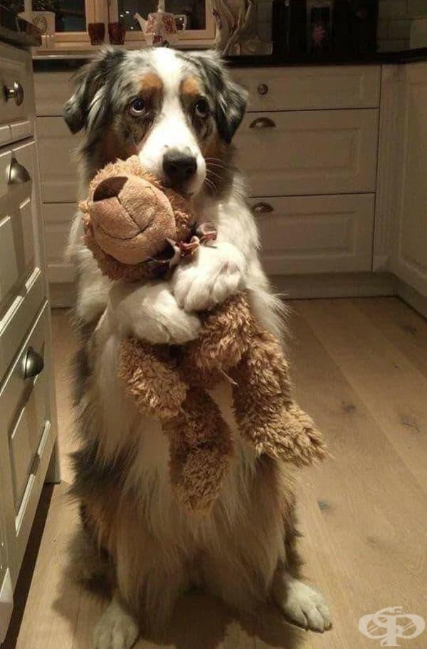 """""""Може ли да взема тази играчка в леглото си?"""""""