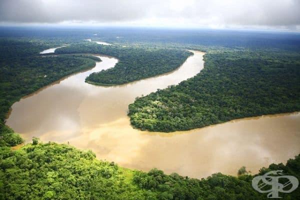 Воден басейн, разположен между Белем и Манаул, Амазония, Бразилия.