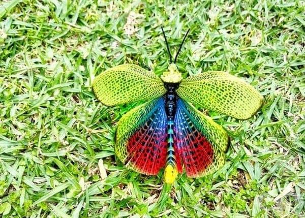 Ето как изглеждат крилата на скакалеца отвътре.