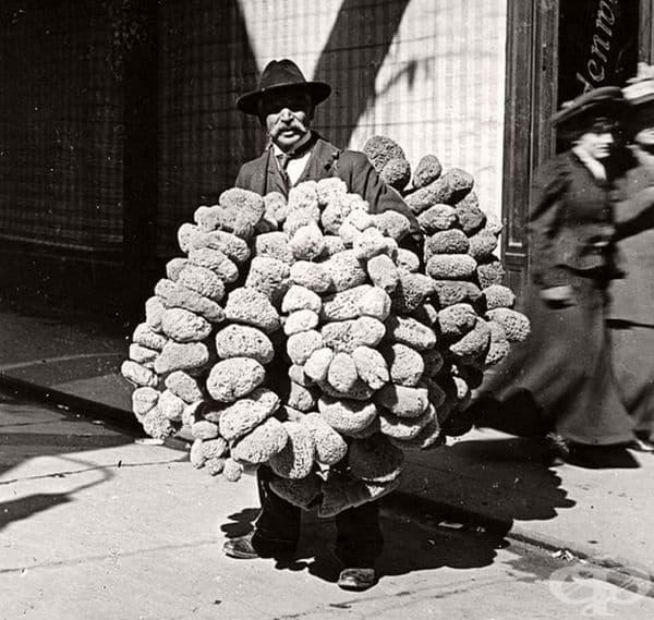 Продавач на гъби във Виена, Австрия през 1904 г.