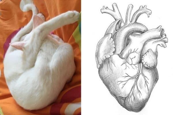 Тази поза не ви ли прилича на сърце?