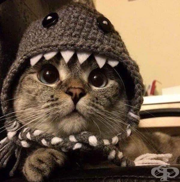 Котка - акула.