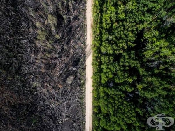 От едната страна на улицата е имало пожар, но от другата страна гората се е запазила непокътната.