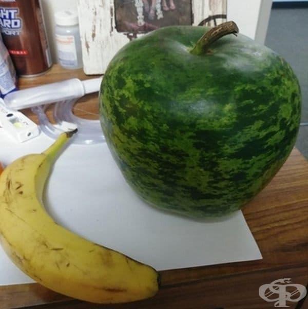 Тази тиква изглежда като диня, оформена като ябълка.