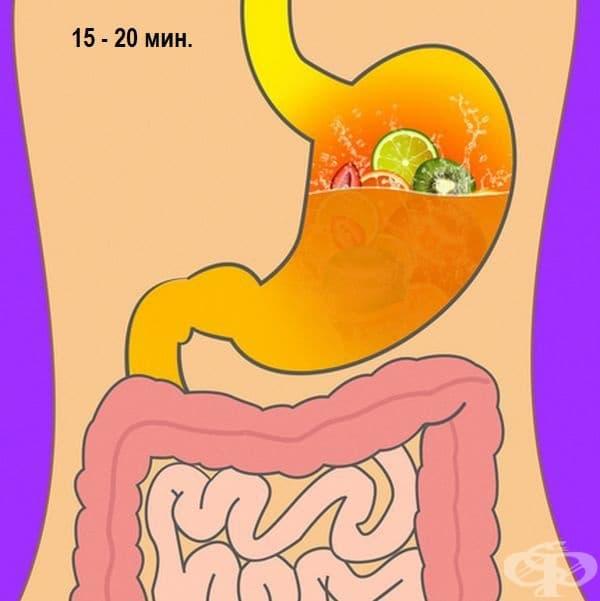 Плодов или зеленчуков сок - 15-20 минути.