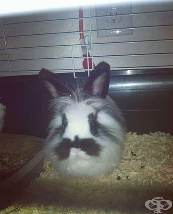 С тези мускаци малко зайче изглежда като голям заек.