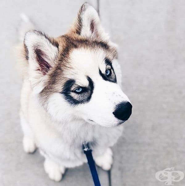 С тези очи не може да бъде объркан.