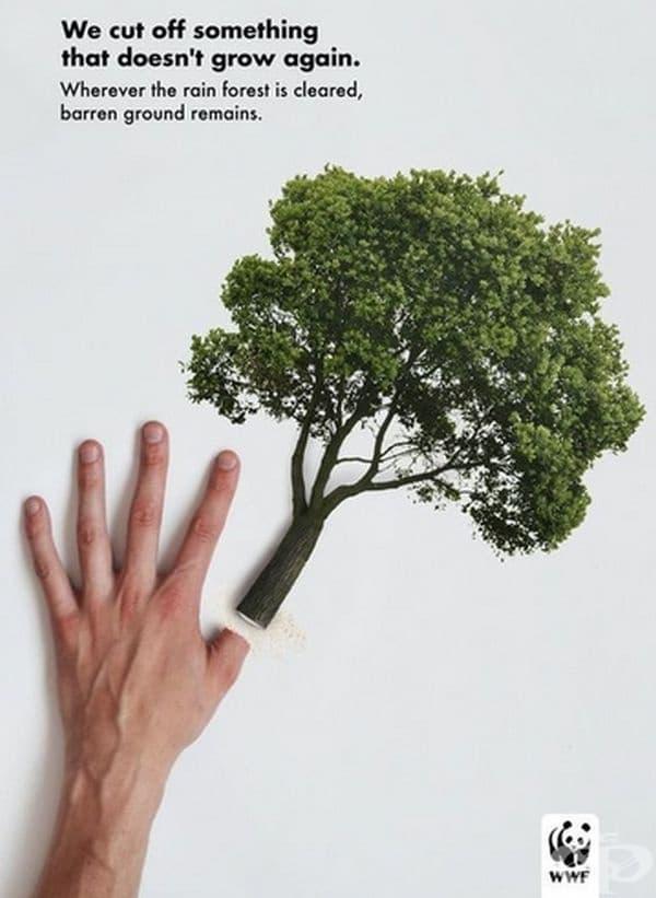 Процесът на възстановяване на горите отнема десетилетия.