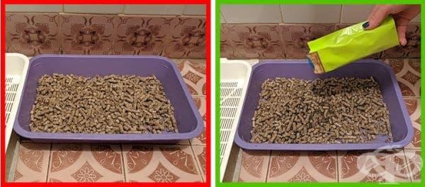 Отървете се от миризмата на котешка храна. Просто поставете на дъното на купичката сух зелен чай.