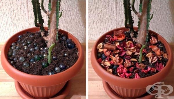 За да не посяга повече на любимите ви растения, поръсете пръстта с няколко сухи цветя. Те ще я затруднят да любопитства и вероятно сама ще се откаже.
