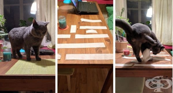 Научете вашата котка да не се качва по масата или бюрото. За целта поставете няколко ленти с хартия, която е лепкава в горната си част. Този трик определено ще откаже котката от този навик.