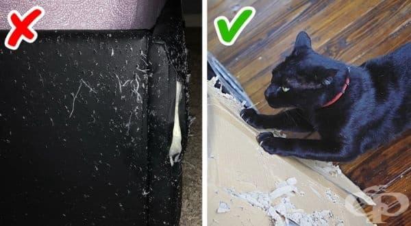 Научете котката си да не драска по мебелите. Това е трудна задача, но все пак може да поставите на няколко места в дома си кашони, които да бъдат използвани за тази цел. Постепенно те ще станат по-желаното място на техните нокти.