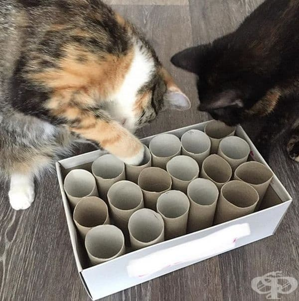 Направете играчка. В кутия за обувки наредете ролки от тоалетна хартия. Това е интригуващо за котките, те постоянно търсят какво се е скрило там.