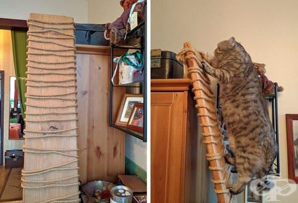 Стълба за котки. От широка дъска и въже може да направите стълба, която да се прикрепи към шкаф или стена. Вашият домашен любимец ще бъде любопитен да се изкачва.