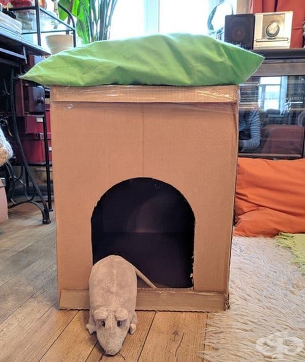 Къща за котки. От картон или кутия може да направите къщичка за котки. В нея поставете меко одеялце.