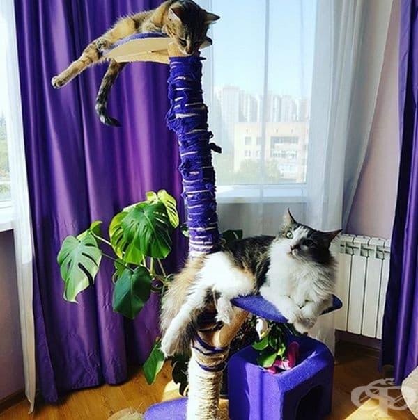 А, ако сте по-изобретателни, може да направите по-интересен дом на вашето коте.