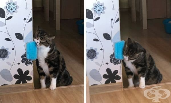 Прикрепете четка за разресване към стената. Котките обичат да се грижат за себе си и със сигурност няма да я подминават.