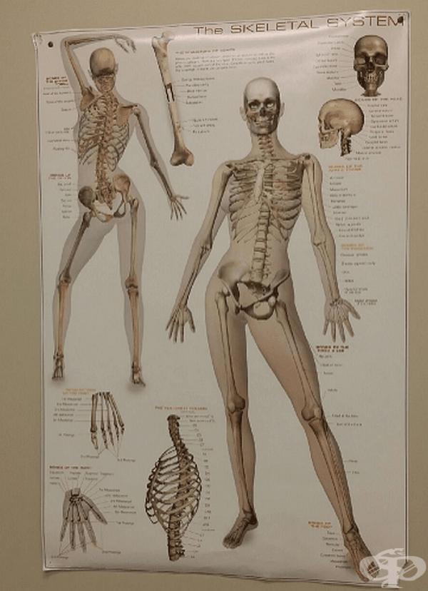 Забавен скелет.