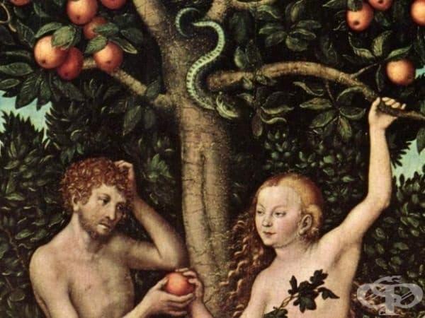 В Библията не се споменава за ябълката, изядена от Адам и Ева. Там се говори само за плода на определено дърво.