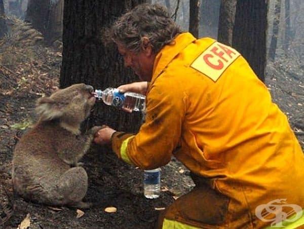 След пожар животните са най-големите жертви.