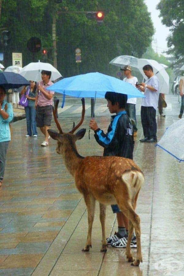 Никой не иска да се мокри в този проливен дъжд.