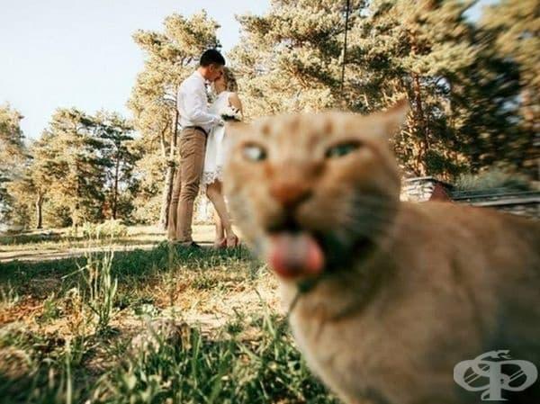 Когато коткат ви търси внимание.