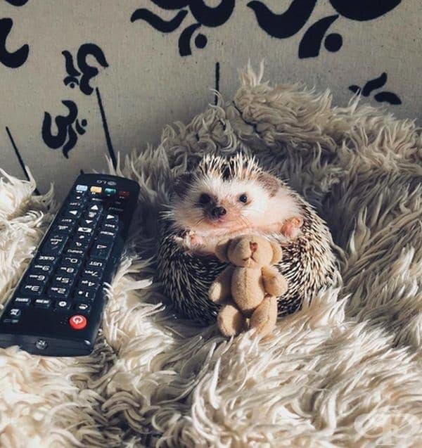 Съсредоточен пред телевизора.