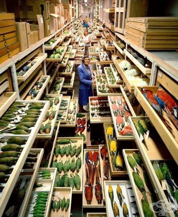 Секретният отдел на Американския природонаучен музей.
