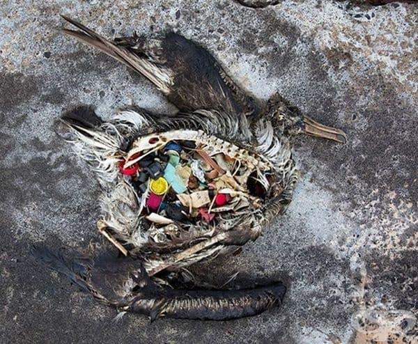 Мислим, че микроскопичните отпадъци са безвредни, но всъщност не е така.