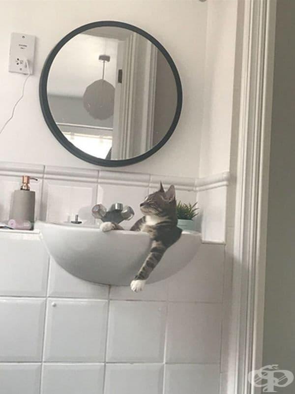 """""""Моята котка, когато си мисли, че е сама вкъщи."""""""