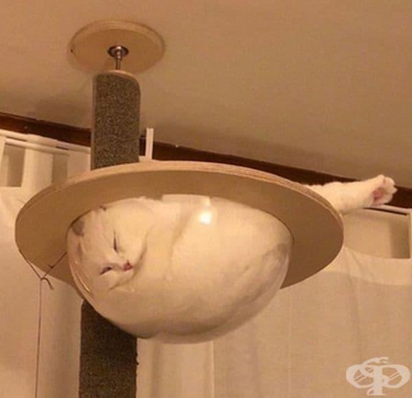 Поредното доказателство, че котките изглеждат като странно и дори смешно понякога.