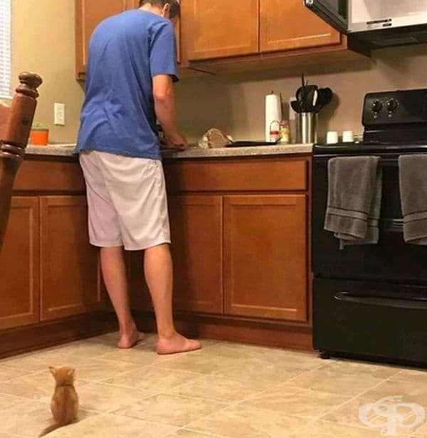 В очакване на своята вечеря.