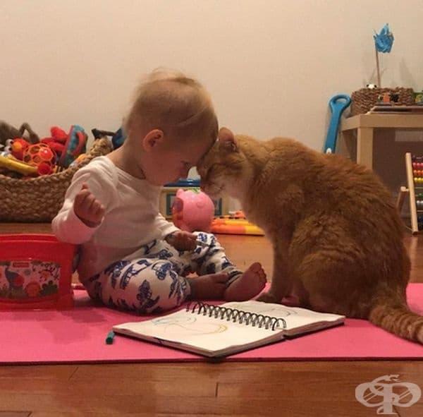 """""""Сприятеляване между сина ми, който е на 1,5 години и 14-годишната ми котка."""""""