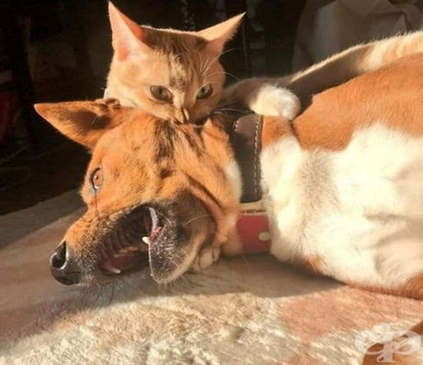 Властна котка.