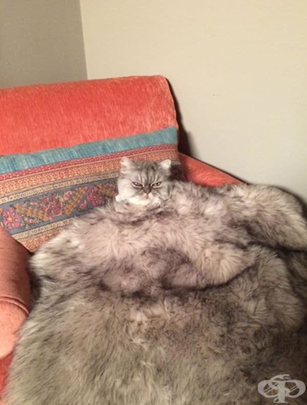 Котка под прикритие.