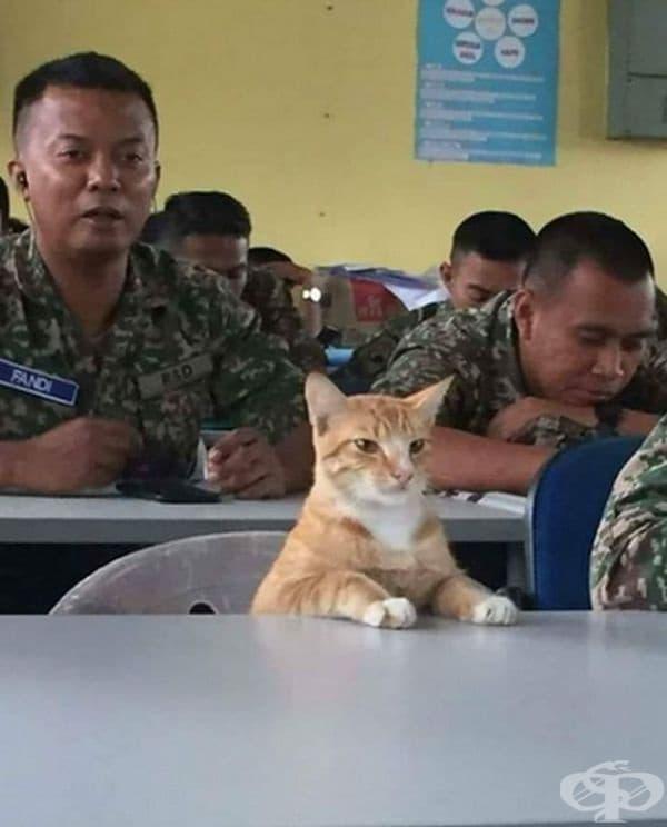 Сержант Мяу.