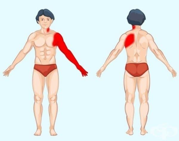 Сърце. Ако нещо не е наред със сърцето, човек чувства компресираща болка в гърдите, която може да се разпространи в лявата ръка, плешката и част от шията. За разлика от други видове болка, болката в сърцето не се свързва с движение или дишане.