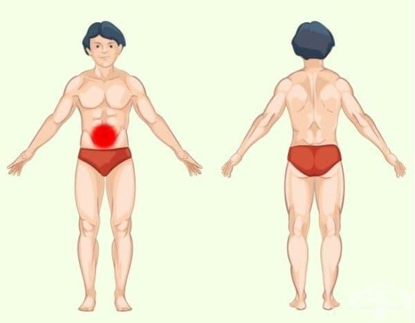 Тънко черво. Проблемите с тънките черва обикновено причиняват болка в областта на пъпа. Ако болката продължава и причинява дискомфорт при ходене, например, не отлагайте посещението при специалист.