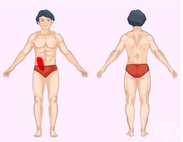 Дебело черво. Проблемите с този орган обикновено са свързани с болка в долната част на корема, по-близо до дясната страна. Редовната констипация също е характерна черта.